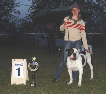 Best In Show!  Ockenheim Germany September 11 2005! Bulldog City' S Cool Cat aka Kephren Owned By Emilie HAREL, France  Bred By Didier Sidbon