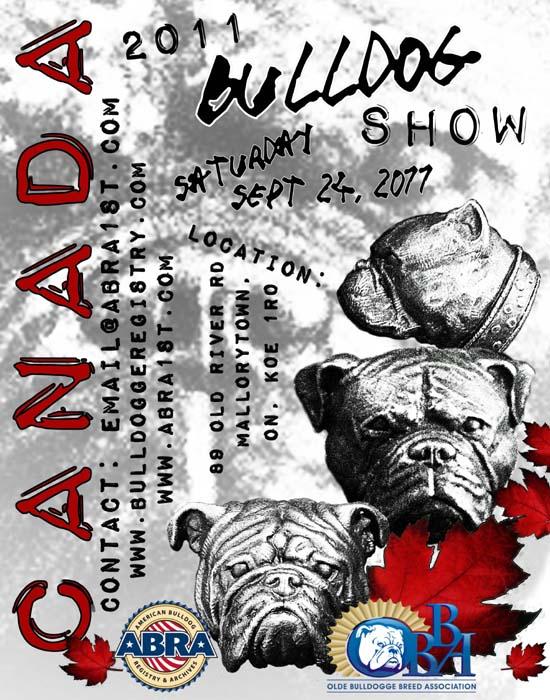 american bulldog show in canada