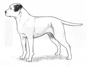 ABRA - American Bulldog Registry & Archives | Breed Standard
