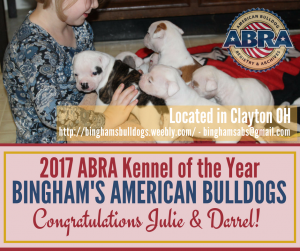 american bulldog registry and archives kennel of the year